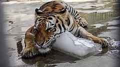 Óriási beruházás indul a  veszprémi állatkertben