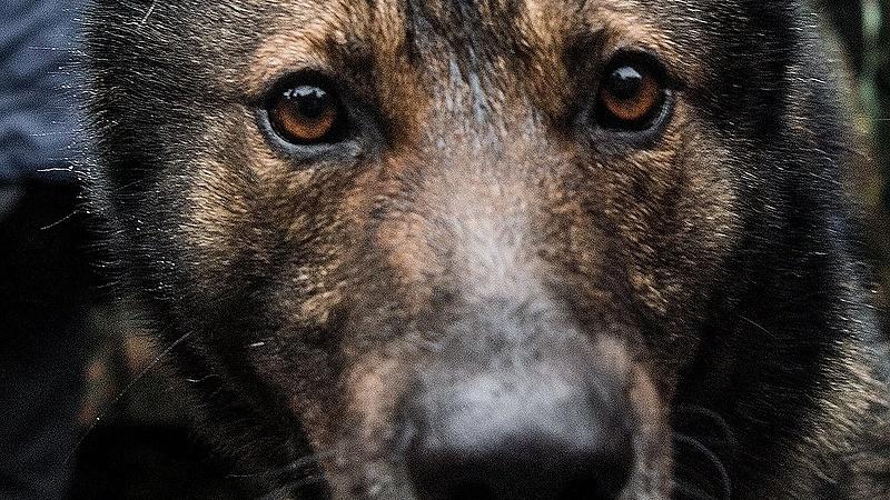 Állatvédelem: eggyel nagyobbat lép a kormány
