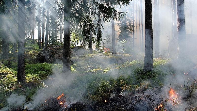 Égnek a horvátországi  erdők - a kormányfő alapos vizsgálatot rendelt el