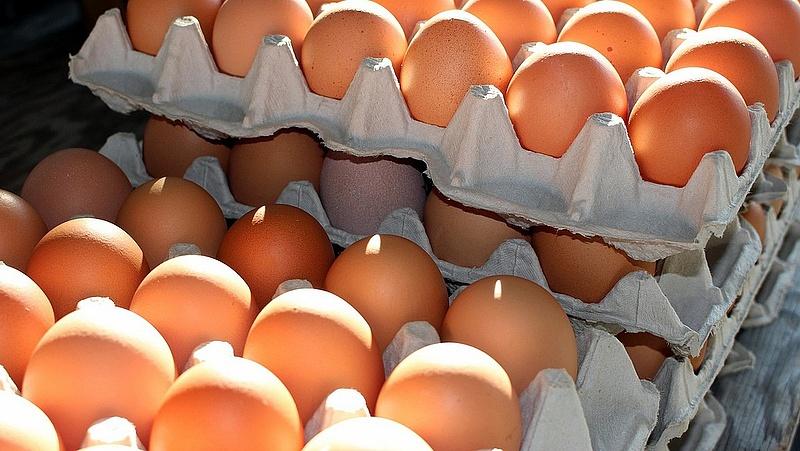 Újra felbukkantak a mérgező tojások