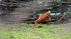 A duplájára drágulhat a tojás, ha engednek a vásárlóknak