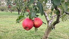 Megdöbbentő adatok a gyümölcsökről - ezeket a boltba sem engedik be