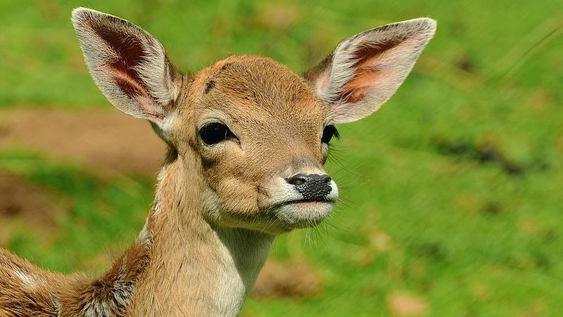 Tudta? Március 3-án van a vadvilág világnapja