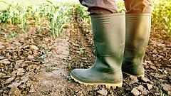 Újabb földek eladását tervezi az agrártárca