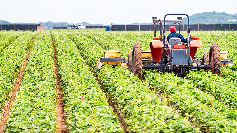 Gazdákhoz igazított támogatást ígér az agrártárca