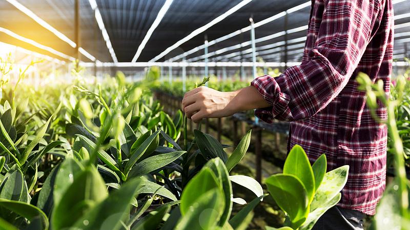 Áprilisra lesz üvegházi zöldség