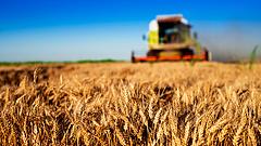 Lesz elég gabona, de nagy az aszálykár is
