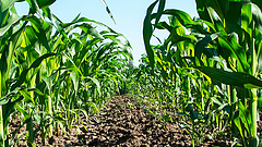 Visszaesett a magyar mezőgazdaság kibocsátása