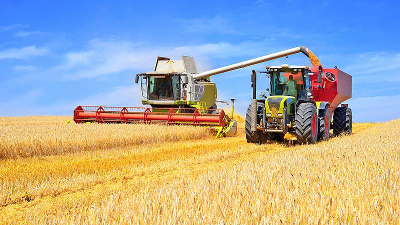 Merre mennek a gabonaárak? 15 százalékkal kevesebb búza teremhet