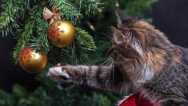 Nem gondolná, mit akar a gyerek karácsonyra!