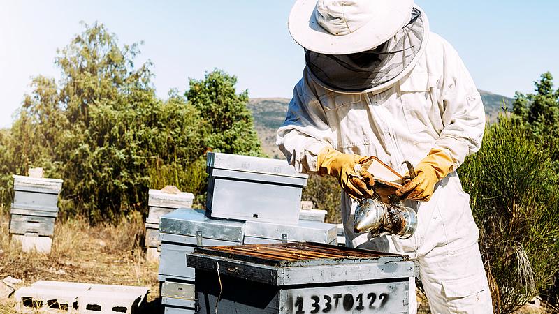 Több támogatás a méhészeknek és a galambtartóknak