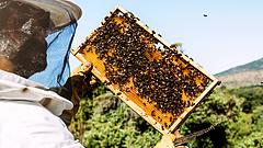 Új jövedelempótló támogatás a méhészeknek