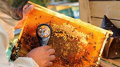 Bajba kerültek a magyar méhészek