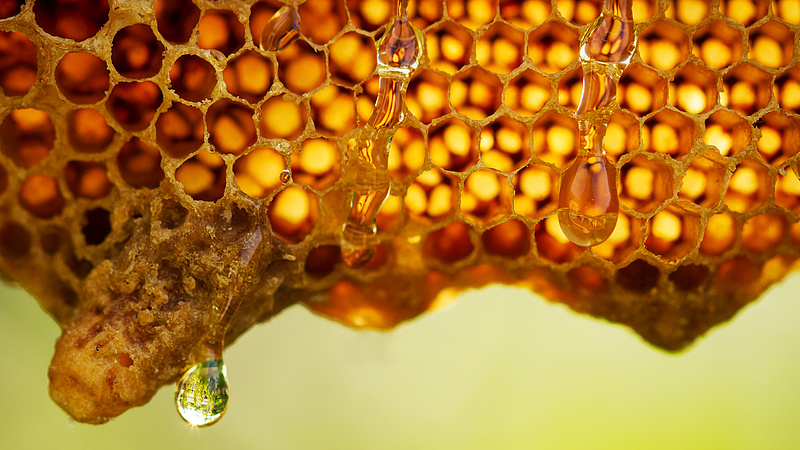 Magyar javaslat mentheti meg az EU méhészeit