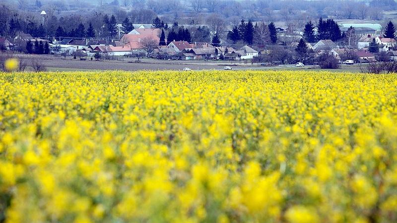 Aggódnak a magyar gazdák a meleg időjárás miatt