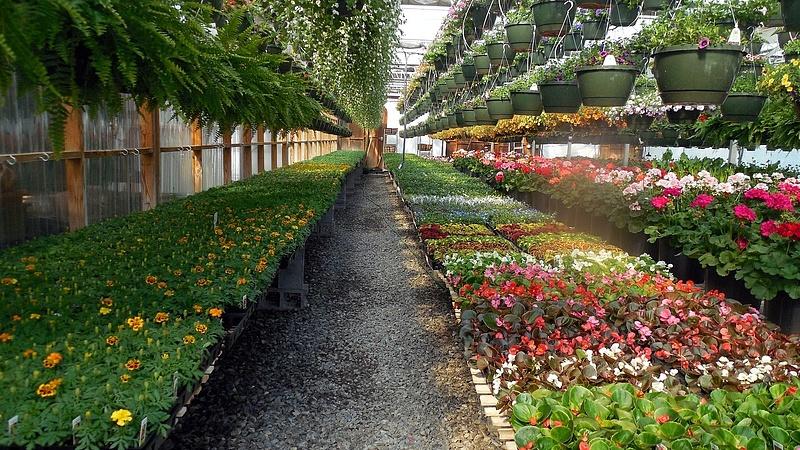 Egyre több munkás kell a kertészetekbe