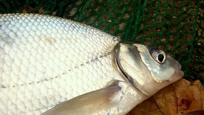 Horgászok, figyelem! Tilalmi időszakra figyelmeztet a hatóság