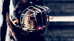 Kemény bírság fenyegeti a kutyatartókat a lengyeleknél