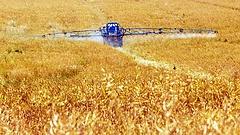 Elterjedt rovarölőszert tiltott be az EU