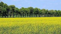 A magyar mezőgazdaságot a támogatások tartják életben