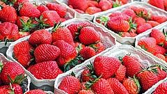 Szereti az epret? Elhasalt az Aldi, az Auchan és a CBA