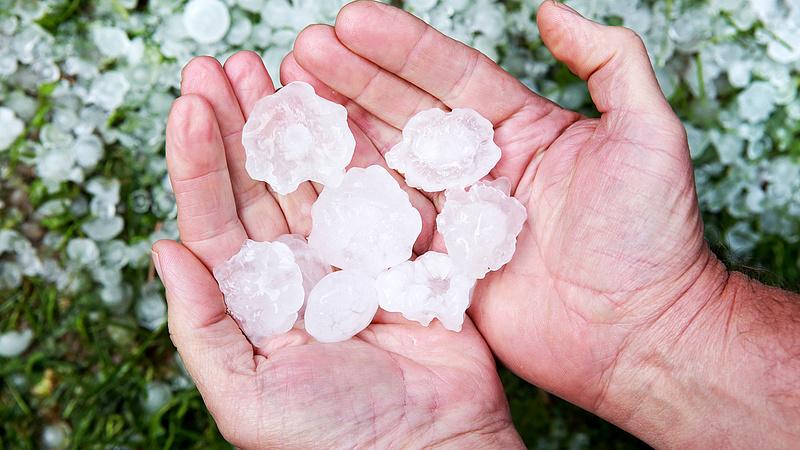 A legutóbbi viharok elérték a magyar dinnyeföldeket is