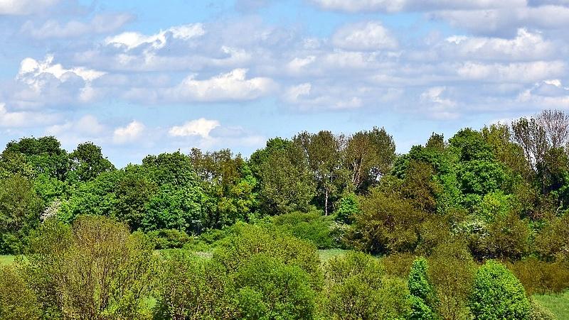 Benzinkút miatt vágnának ki egy kis erdőt a Balatonnál