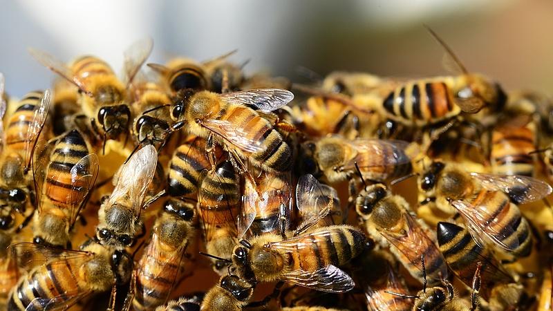 Nagyon aggódnak a magyar méhészek