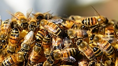 Jól szituált városiak fogadják fel leginkább a százéves családi méhészet kaptárlakóit