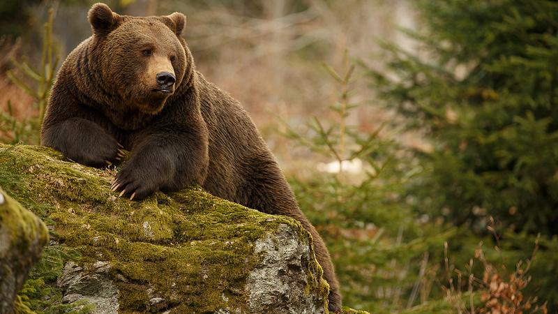 Medve jelent meg a magyarok kedvenc üdülőhelyén