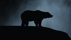 Rendezik a medvék helyzetét Romániában, kiszűrik a gondokat okozó állatokat