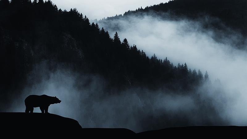 Most Miskolcon sétált egy medve