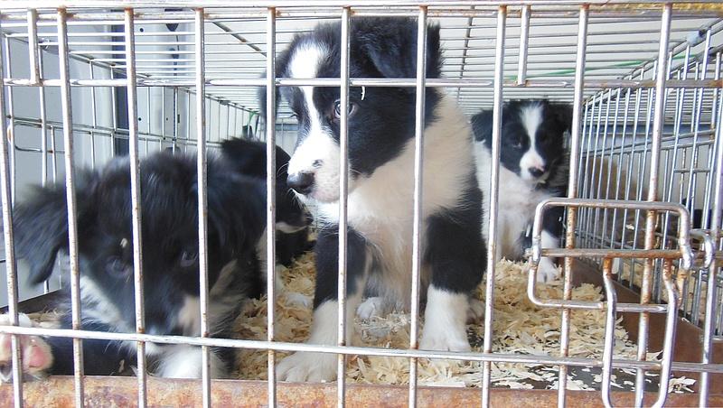 Állatvédelmi ügyekről kérdezi a magyarokat kormány
