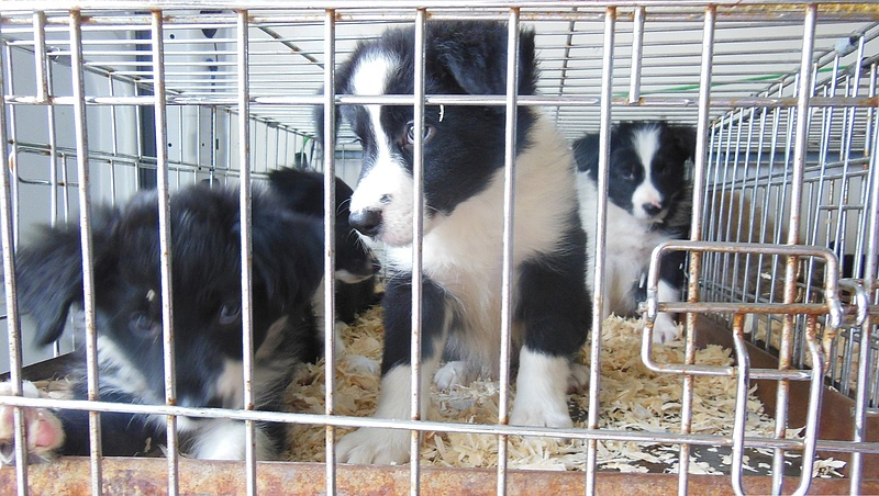 Kutyamenhelyeket támogat egy új közösségi adománygyűjtő program