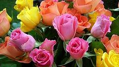 Jön a nőnap, készülnek a virágosok