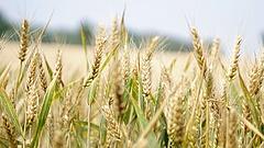 Betett az időjárás a mezőgazdaságnak