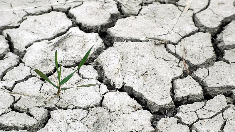 Még forróbb lesz a jövő év - visszatér a rettegett időjárási anomália
