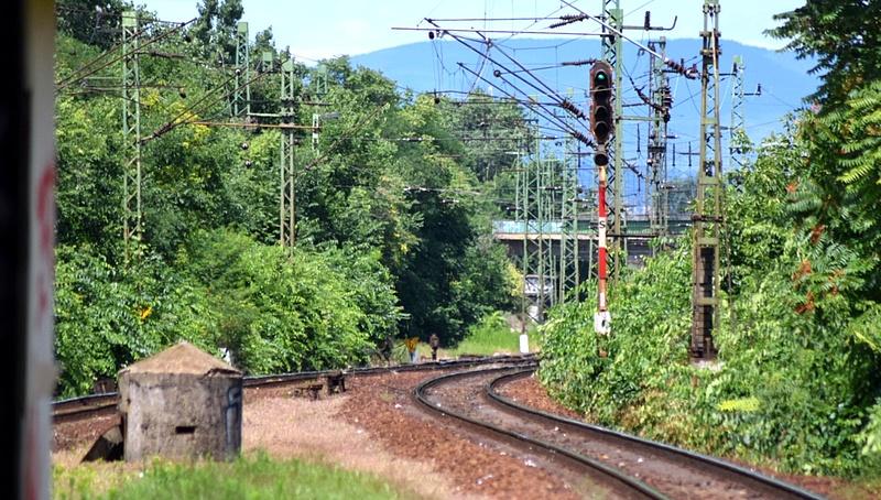 Kidőlt fa akadályozza a vonatközlekedést
