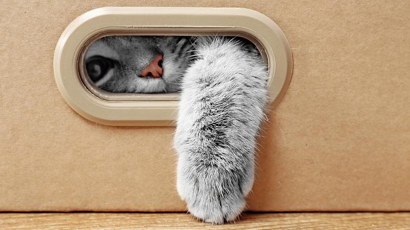 Visszahívtak egy macskaeledelt