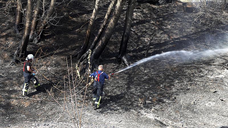 Tűzgyújtási tilalmat rendeltek el öt megyében