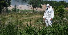 Pestisben elhullott sertések tetemei lepik el a Dunát