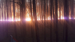 Ökológiai katasztrófa fenyeget Németországban