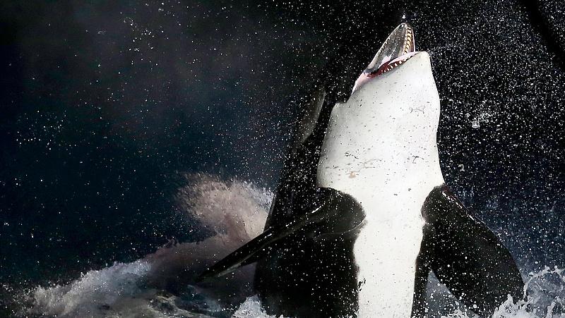 Egyre több bálna és delfin pusztul el Nagy-Britanniában