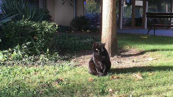 Eddig nem tudták, de most már tudják, hogy hány macska van Washingtonban