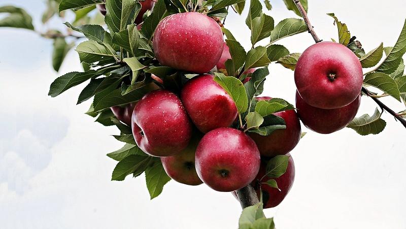 Friss adat: jelentősen csökkent a zöldség- és gyümölcstermesztés volumene tavaly