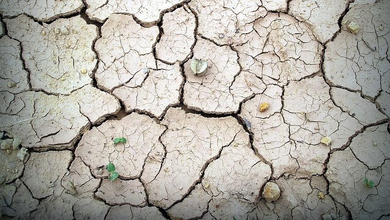 50 ember halt meg Indiában a hőség miatt