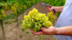 Jön a rendrakás a magyar boroknál
