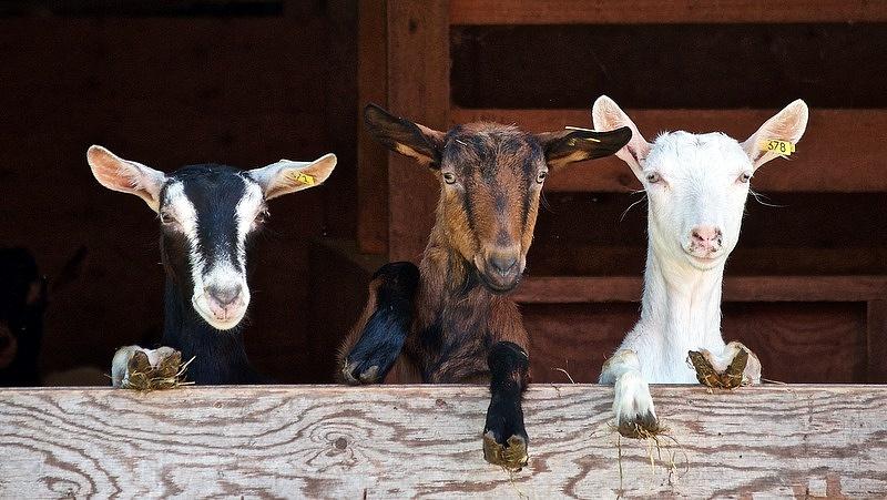 Megnyílt a legkisebb gazdálkodókat segítő vidékfejlesztési pályázat