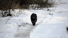 Állami program segíti a kutyák örökbefogadását