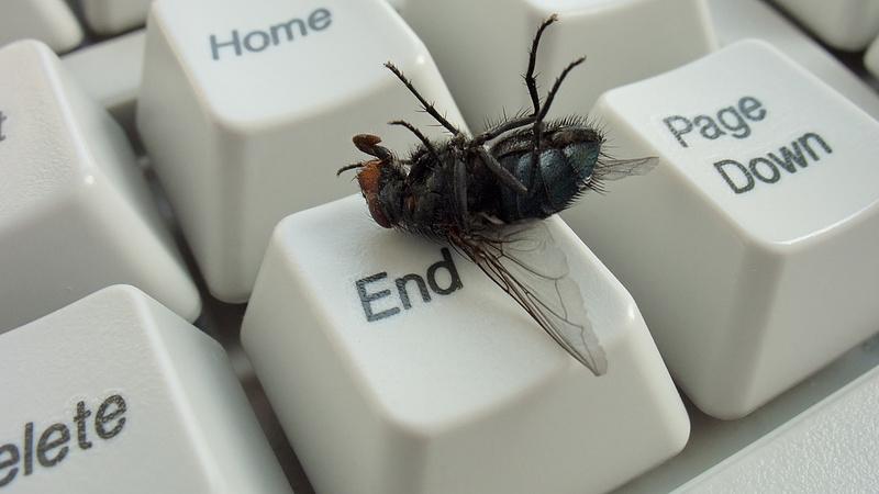 A rovarok kipusztulásával elindult az új kihalási ciklus